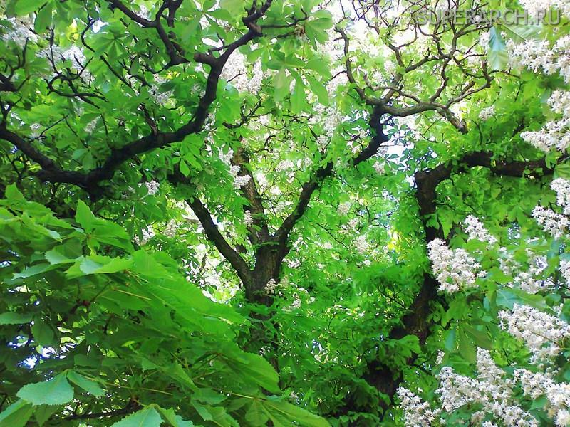 Какие деревья можно сажать возле дома приметы 65