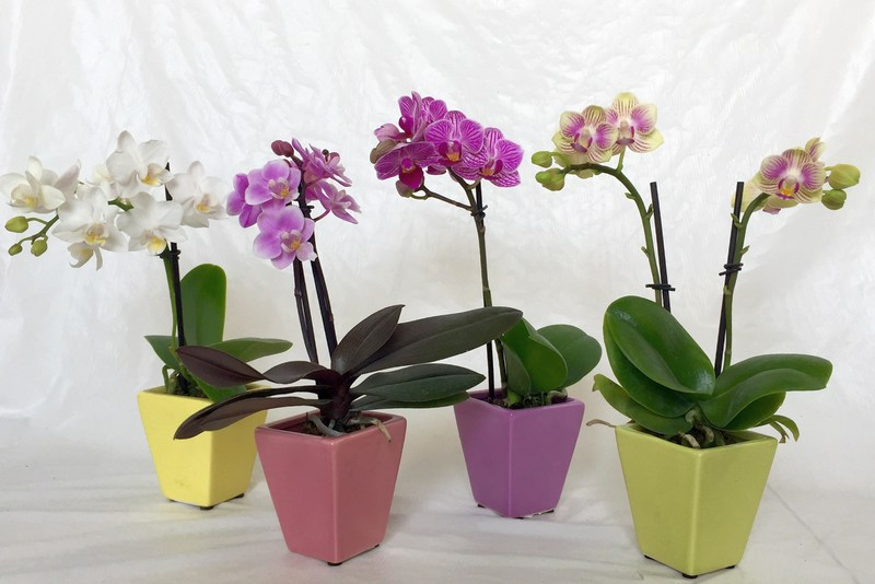 Уход за орхидеями мини в домашних условиях