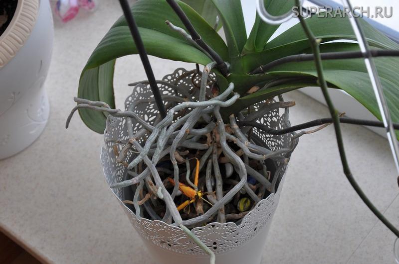 Чем удобрить орхидеи в домашних условиях