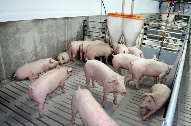 Порно с свиньями онлaйн видео без регистрaции