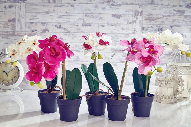 Как ухаживать за орхидеей в домашних условиях при цветении