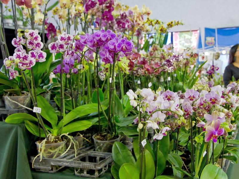 Сколько раз в год цветёт орхидея в домашних условиях 538