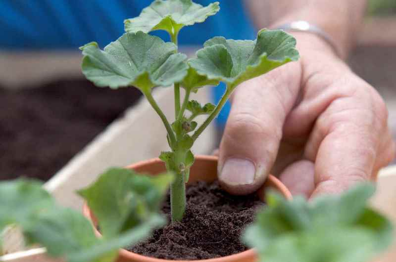 Выращивание калачика 1